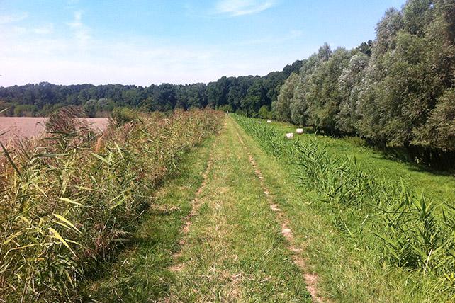 Esztergom – Máriagyűd 431 km 2014 Augusztus 12/18