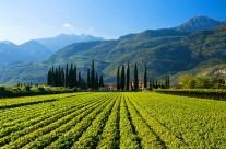 Szőlőbirtok Arco Garda tó