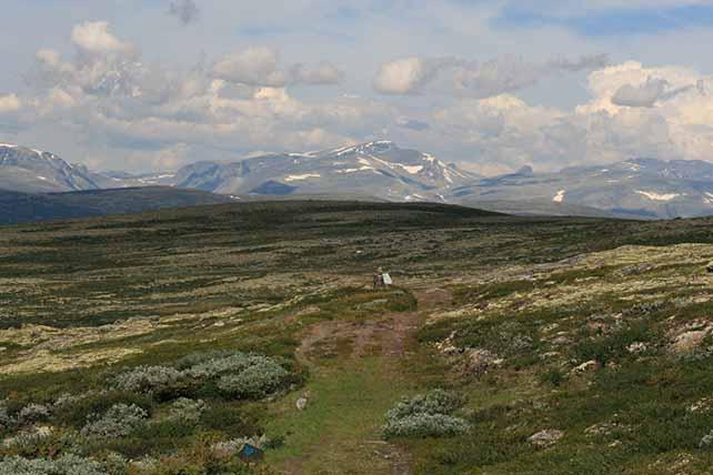 Szent Olaf útja Dovrefjell