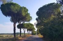 Zarándokút via Francigena di San Francesco Monterotondo előtt-Olaszország