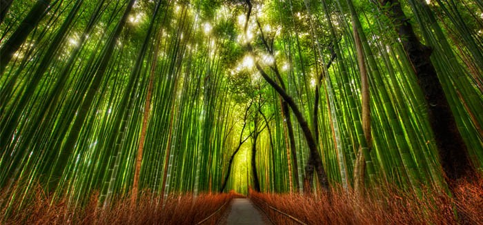 Bamboo-Forest-Japan.