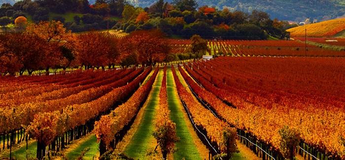 napa_valley_california