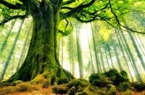 Felfedezésre váró misztikus erdők