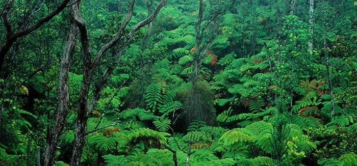 hawaii-volcanoes-national-park-forest