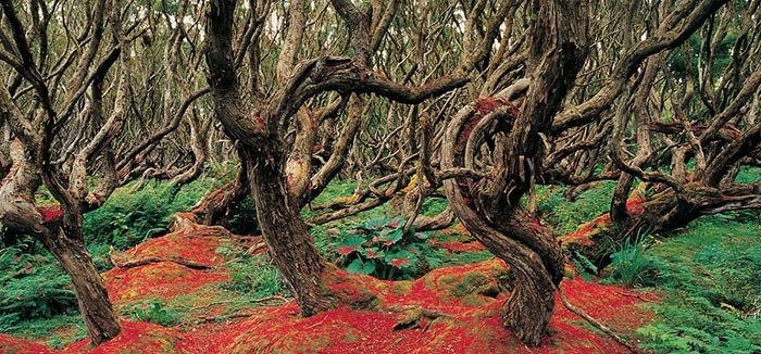 rata-forest-new-zealand